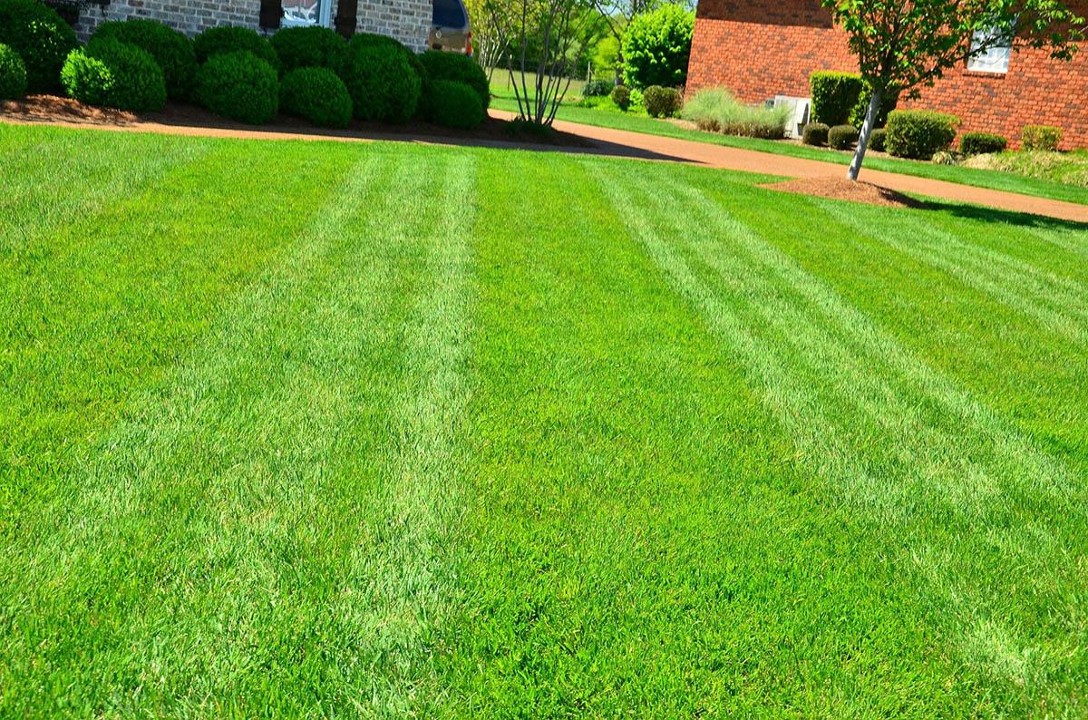 Koszenie trawy jesienią - 4 cenne porady dotyczące pielęgnacji trawnika